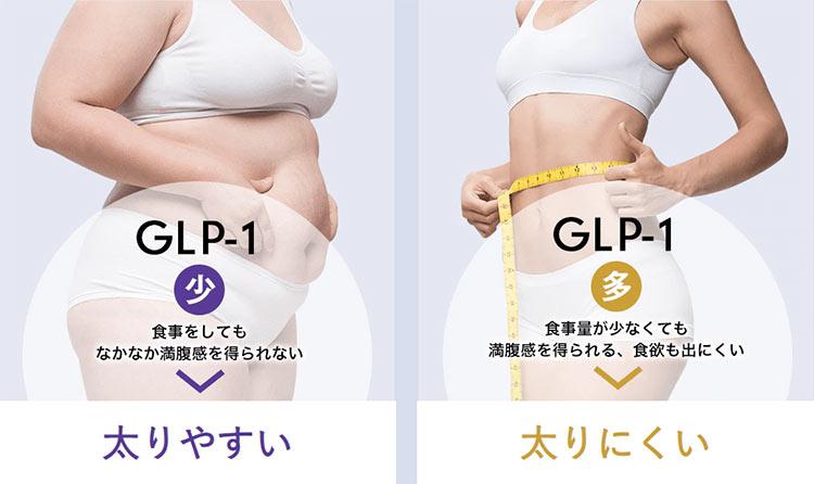 GLP-1が少ないと太りやすく、GLP-1が多いと太りにくい